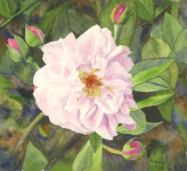 Andrea Hazel painted this Noisette Blush Rose for her cousin, who is a Noisette and is attending the Family Reunion this weekend in Charleston